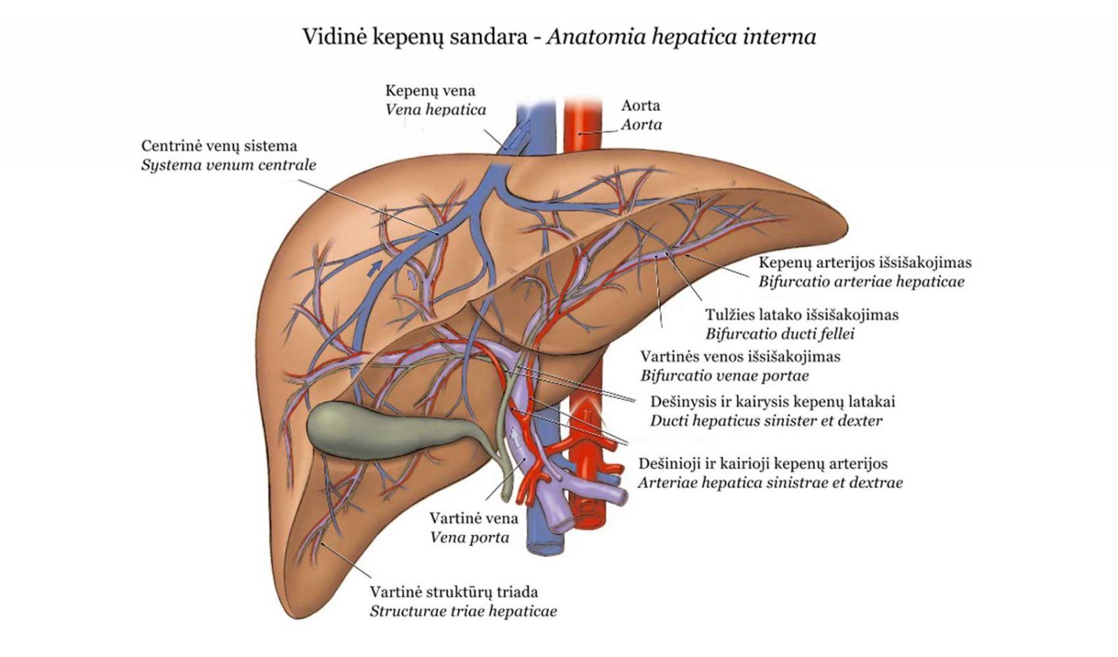 Vartų venos trombozės diagnostikos ir gydymo algoritmas