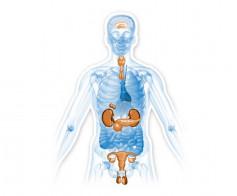 Endokrininės ligos