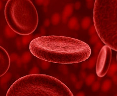 Kraujo ligos